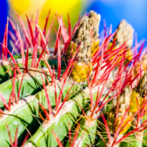 Jardin Majorelle Marrakech Marocco YSL 3074 215x215 Nature