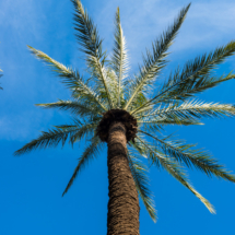 Jardin Majorelle Marrakech Marocco YSL 86786 215x215 Nature