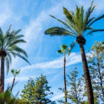 Jardin Majorelle Marrakech Marocco YSL 86793 215x215 Nature