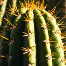 Jardin Majorelle Marrakech Marocco YSL 86800 215x215 Nature