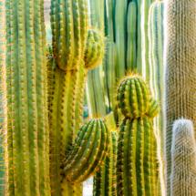 Jardin Majorelle Marrakech Marocco YSL 86807 215x215 Nature
