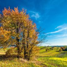 nature, landscape, -3300