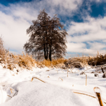 winter 6214 215x215 Landscape