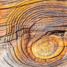 wood wood texture 2188 215x215 Various