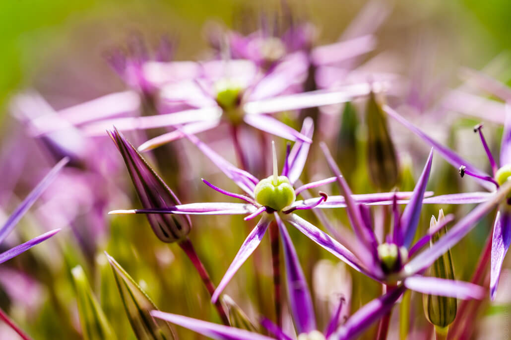 Flowers-Botanical-Garden-in-Cracow-4339