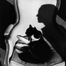 Henri Cartier Bresson Our cat Ulysses and Martines shadow. 1989 215x215 Photos of Henri Cartier Bresson