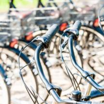 Nederland Zaanse Schans 0395 215x215 Various