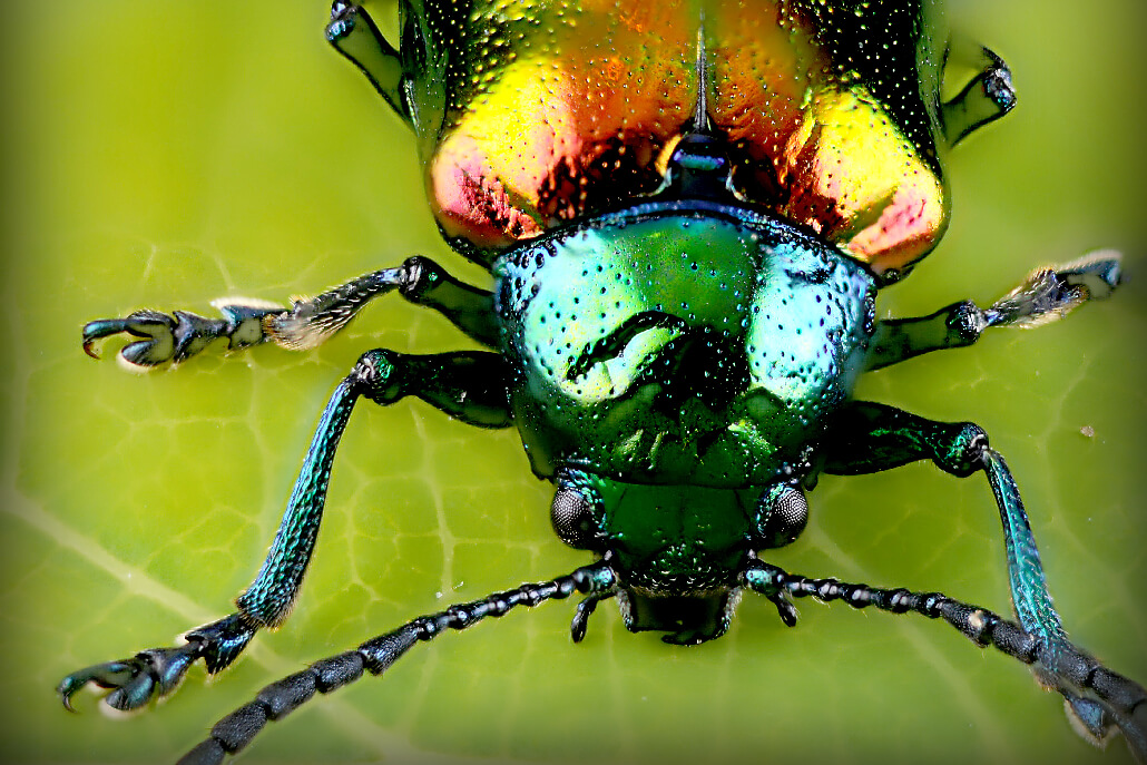 Unsplash Photo by Alan Emery 52 Subjects to Photograph   Photography Challenge   An insect