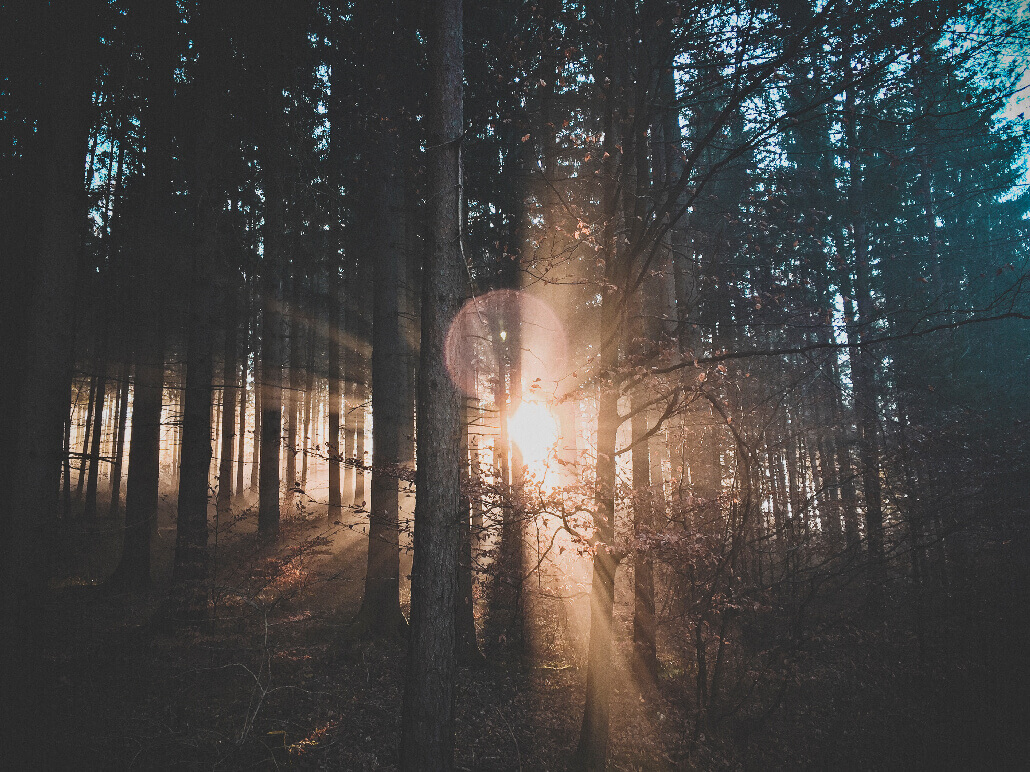 Unsplash Photo by Ju On 52 Subjects to Photograph   Photography Challenge   A sunbeam