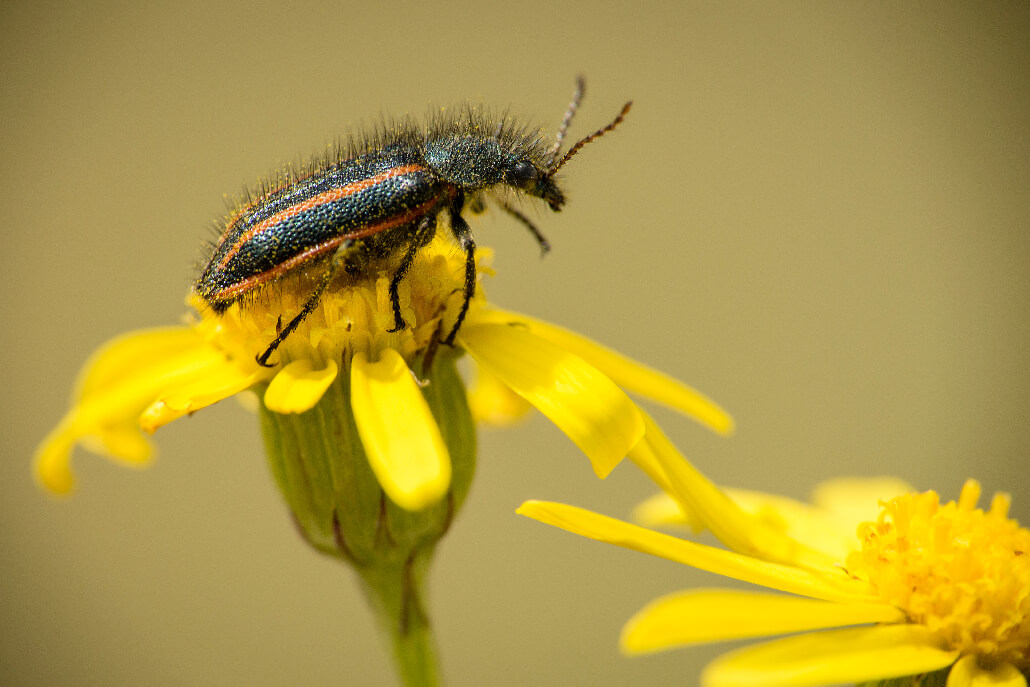 Unsplash Photo by Manlake Gabriel 52 Subjects to Photograph   Photography Challenge   An insect