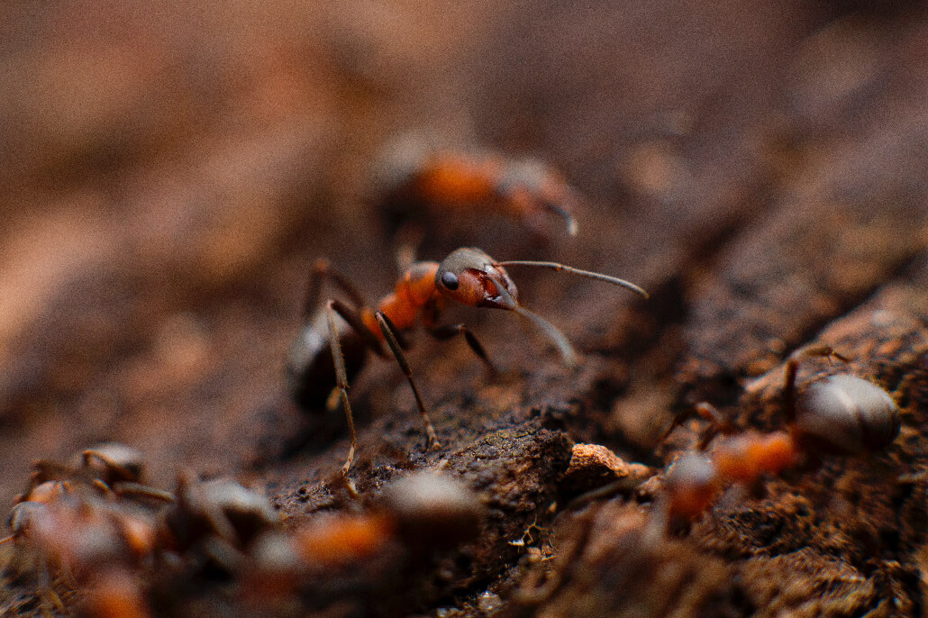 Unsplash Photo by Mikhail Vasilyev 52 Subjects to Photograph   Photography Challenge   An insect