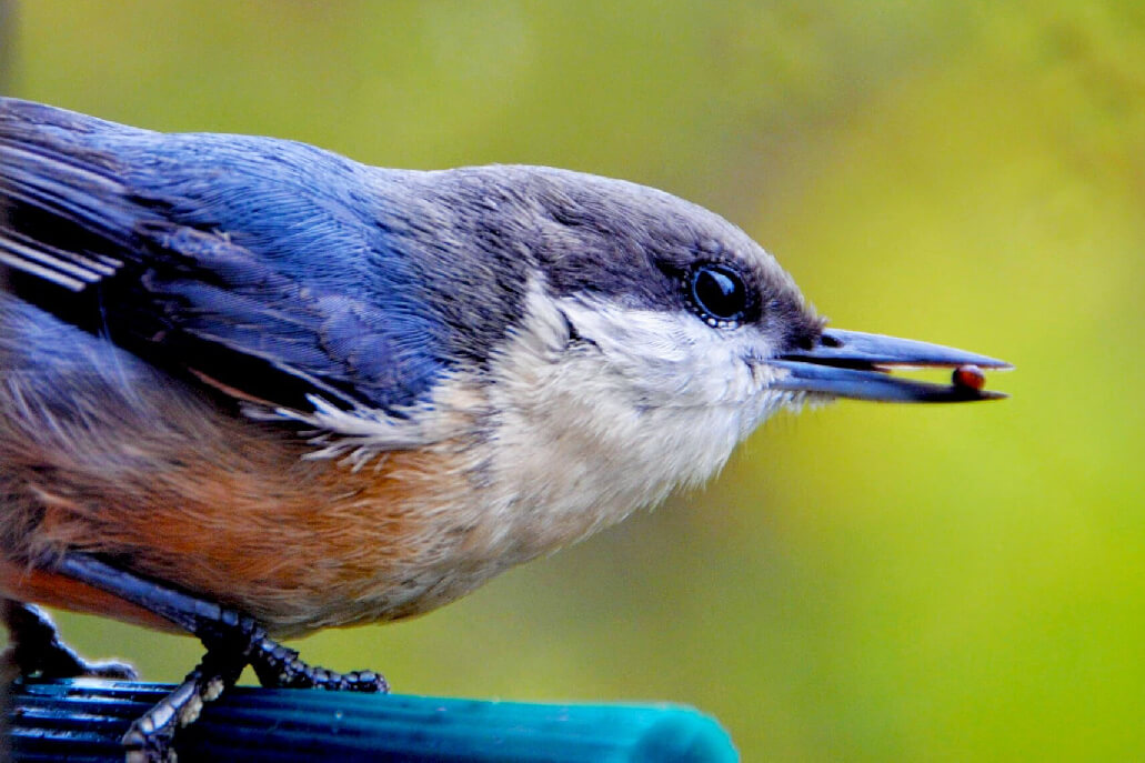 Unsplash Photo by Noah Rosenfield 52 Subjects to Photograph   Photography Challenge   Birds
