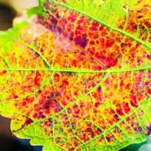 leaf nature 2452 215x215 Nature