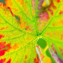 leaf nature 2456 215x215 Nature