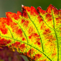 leaf nature 2463 215x215 Nature