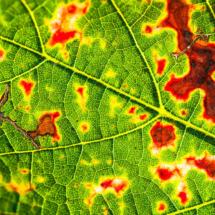 leaf nature 2464 215x215 Nature