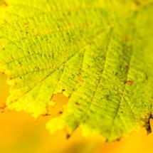 leaf nature 3457 215x215 Nature